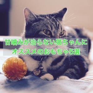 甘噛みが治らない猫ちゃんにオススメのおもちゃ5選