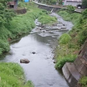 2021 鮎解禁 富士川