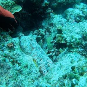 海の中のゴミ拾いの紹介ムービー(海洋保護、環境保護、環境教育)