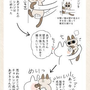 猫壁チャレンジ