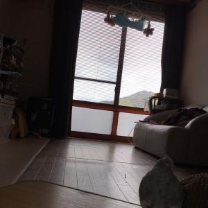 ペット 鳥 掃除 ダイニングラグ  ラグ  フローリング 木目 床 カーペット 絨毯 敷物 犬 猫 衛生的 木 防水 汚れ 撥水
