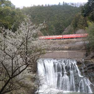 桜と滝・烏山線