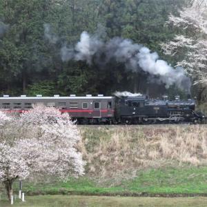 真岡鉄道SLと 残念桜