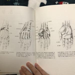 【中~上級者向け?】優しくない『やさしい美術解剖図』のレビュー!中身は医学書並みだった?!