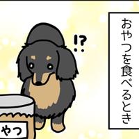 おやつの食べ方は犬それぞれ?