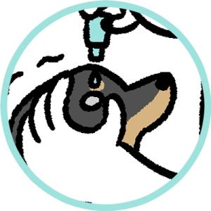 犬の目薬とタイマー