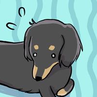 15歳シニア犬の現在の様子:R