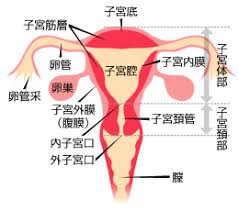 子宮を摘出された方のお話