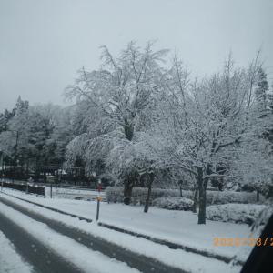 またまた 雪