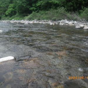 板取川上流釣行
