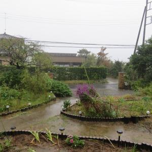 凄い雨でした~☔