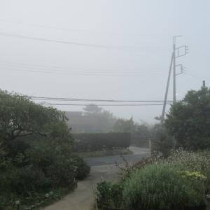 濃霧の夜明け~🎶