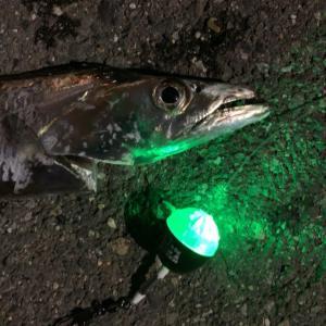 ふれーゆ裏でタチウオ新釣法【タチフロート】を試してみた結果!?