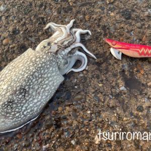 シリヤケイカの釣り方/エギングのコツはしゃくらない!?【ズル引き】の勧め