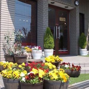 817、お店の玄関先のお花に思いを込めて、コロナウィルスに負けずに頑張ろう!!一枚板と木の家具の専門店エムズファニチャーです。