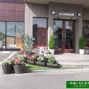 916、今年の梅雨の季節に、花を咲かせ続けるのも難しい。気候が不順で、花たちにも過酷なようです。 一枚板と木の家具の専門店エムズファニチャーです。
