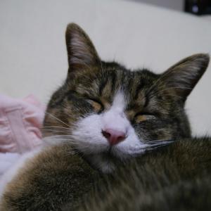 まだまだ ステイホームで 愛猫ももっちに癒される日々