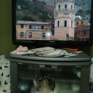 愛猫夢ちゃんは テレビを見ます
