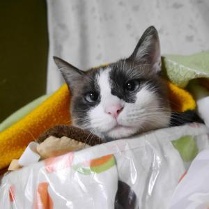 親ばかですが 美猫うちの夢ちゃん見て見て! & ももっち家のだし