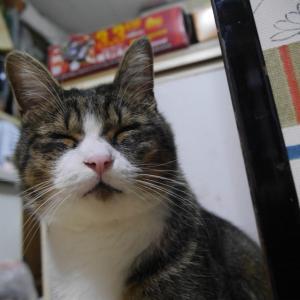 ソファーで今夜も空飛ぶももっち 伸び猫夢ちゃん