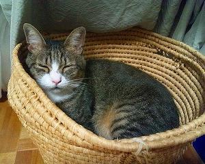 愛猫ももっち写真館② かごにゃんこ