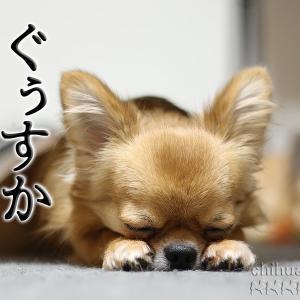 きょうの眠りっぷり