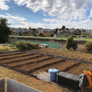 これからイチゴを植えますが 28、畝立て完了