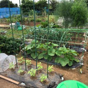 家庭菜園のコスパを考える 58(完)、腰痛とまとめ