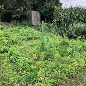 [連載] 美味しい有機イチゴを来年も 6、新しい畑