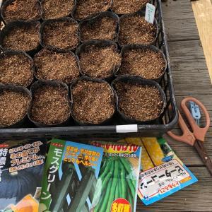[連載] 秋トウモロコシは台風が怖い 2、発芽したけれど