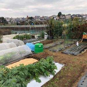 [連載] 九条太ネギの無限栽培 6、畑に溝を掘る