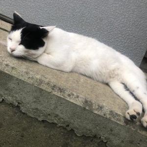 ずぶ濡れの猫さん「にゃーん・・」(ヽ´ん`)「可哀想だな、家に入れてやるか」→結果・・・
