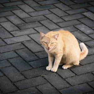 凶暴な猫に悩む飼い主達を猫専門家が助ける番組「猫ヘルパー」が面白い!