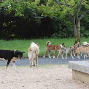 【山口】「ワンワン、ワンワン」「野犬にエサを与えないでください」男性お構いなし 墓地や隣接の公園に野犬の群れ、どうしたら…