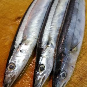 秋刀魚が入荷