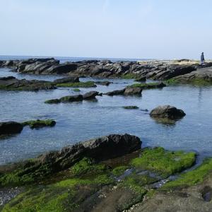 春の三浦海岸ウォーク