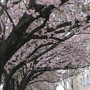 春休みおわり!季節は巡る