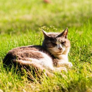魅惑の猫特集…①ノラ猫について