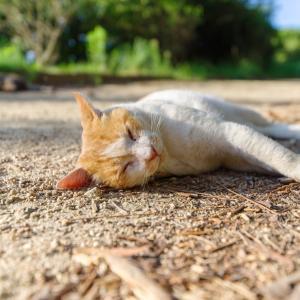 魅惑の猫特集…②表情が豊かなヤツラ