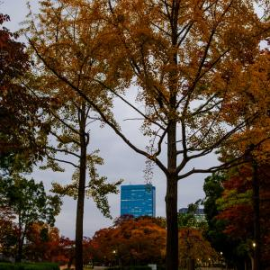 大阪城公園周辺で、紅葉をめでてきました X-Pro2 + XF23mmF2 R WR