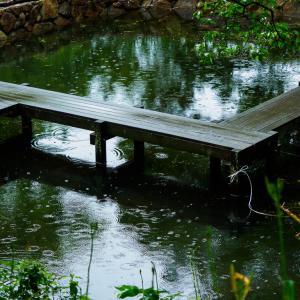 送り梅雨 とても楽しい 植物園…OLYMPUS EM5 Mk2 + M.12-45mmF4.0