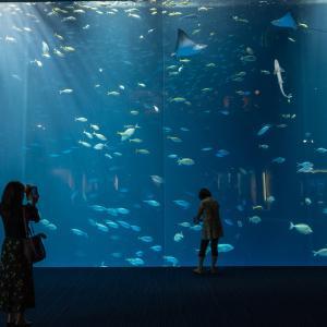 Leica SL2-S + SL24-90mmF2.8-4で撮る四国水族館