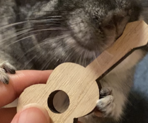 かじり木ギター