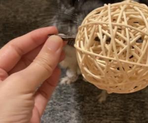 ラタンボールの遊び方