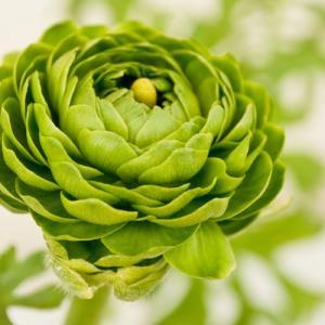 なぜ植物は緑色なのか?