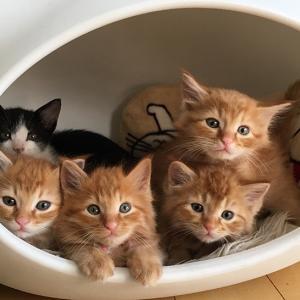 ミキ亜生・猫が好きすぎて保護活動!?猫好き芸人トップ4