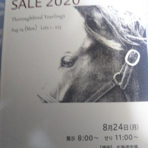 (POG)楽燕カップ21-22に参戦します!~指名馬11位~16位