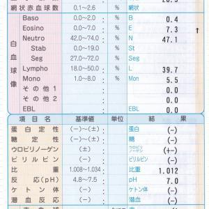 血液検査の結果(食事療法の成績表?)