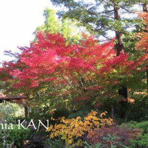 紅葉狩り♪&モンブラン彫り(´∀`*)
