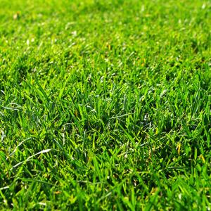 フェアウェイの芝の話【和芝・洋芝】